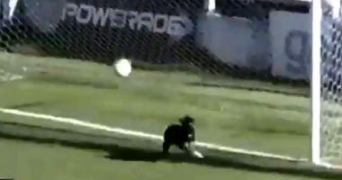 Video incredibil! Momentul în care un câine a ajutat o echipă de fotbal să nu primească gol