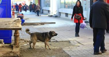 Maidanezii s-au reîntors în cartiere. Primăria Constanţa nu cade la pace cu iubitorii de animale