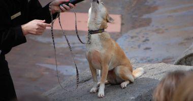 Câinele şi lăutarul