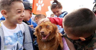 Problema câinilor maidanezi, rezolvată cu umanitate, la Agigea