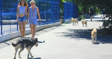 Invazia maidanezilor la Constanța. Câinii fără stăpân terorizează cartiere întregi