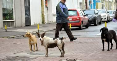 Constanţa mai are 1.550 de câini maidanezi. Unde a dispărut restul de 14.000?