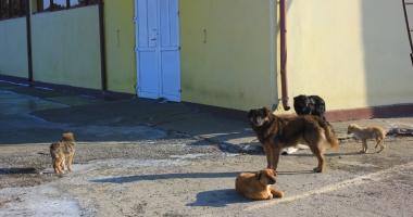Câinii comunitari au reapărut prin cartiere.  Primarul Constanței promite un nou adăpost modern