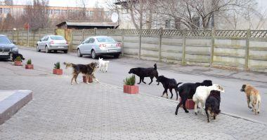 Câinii din Constanța, în atenția USR. Poate Primăria Constanța să-i sterilizeze gratuit?