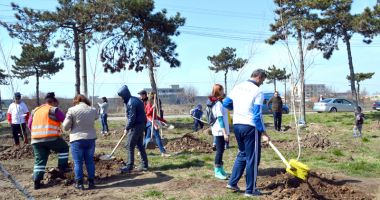 Primăria Municipiului Constanța continuă plantările de primăvară!