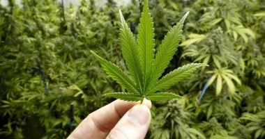 Criză de canabis în Canada, la două zile de la legalizare