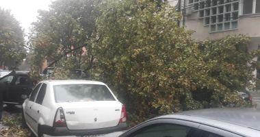 ATENŢIE CONSTĂNŢENI! Evitaţi Zona Capitol! Copac căzut, iar semafoarele nu funcţionează
