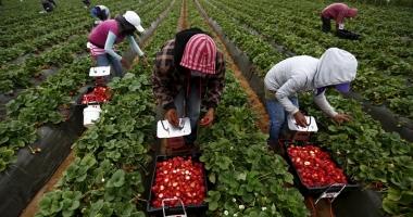 AJOFM. 800 de locuri de muncă sezonieră în agricultură, în Spania