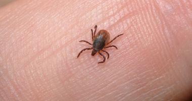 Un parazit cu potențial letal, transmis de căpușe, identificat pentru prima dată în Marea Britanie