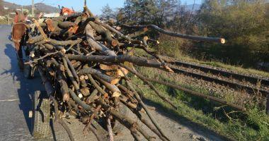 DOSARE PENALE LA CONSTANŢA! Indivizi prinşi la furat de lemne