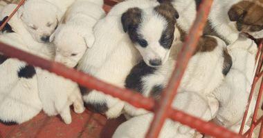 Ce acte îţi trebuie ca să adopţi un căţel de la Adăpostul Constanţa