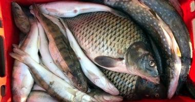 """""""Comercianţii"""" de peşte, în vizorul jandarmilor"""