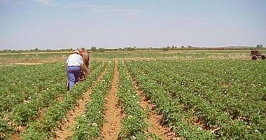Condiţii de eligibilitate relaxate, pentru plăţile directe în agricultură