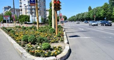 Primăria Constanţa face inventarul florilor plantate. Ce au descoperit