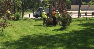 Administrația locală continuă lucrările de igienizare în Constanţa