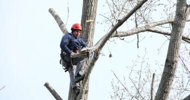 Continuă lucrările de toaletare și corecție a arborilor din oraș