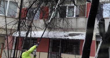 Copaci căzuţi la Constanţa! Se intervine în mai multe zone ale municipiului