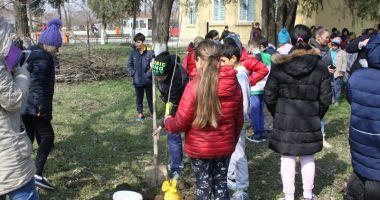 Livadă de pomi fructiferi, plantată  de voluntarii cora City Park, alături de elevi