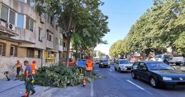 Coroanele arborilor de-a lungul străzii, toaletate pentru a nu încurca circulația rutieră