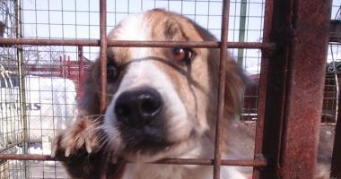 Cruzime  la adăpostul  de animale? Poliția  a deschis o anchetă