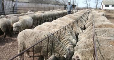 Cum va fi reorganizat Institutului de Cercetare - Dezvoltare pentru Creşterea Ovinelor şi Caprinelor – Palas?