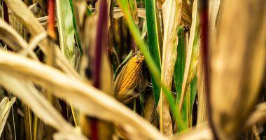 Declararea stării de calamitate pune în pericol producţia următorilor ani agricoli