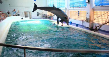 Delfinariul, Microrezervația și Acvariul sunt deschise pentru vizitatori