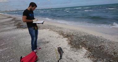 Alertă la malul mării! Şase delfini găsiţi morţi pe plaja de la Hanul Piraţilor