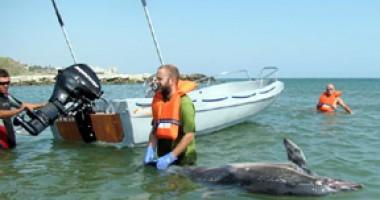"""Ambarcaţiunea """"Delphis"""" pleacă din nou pe urmele delfinilor"""
