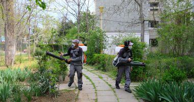 Acțiunile de dezinsecție au fost reluate în spațiile verzi din Constanța