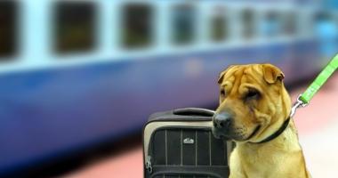 În ce condiţii pot fi plimbaţi câinii cu trenul