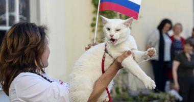 Campionatul Mondial de Fotbal 2018. Pisica oracol Achile a prezis învingătoarea dintre Franţa şi Belgia