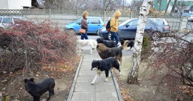 Ce se întâmplă cu câinii maidanezi din Constanța.  Ce soluție a găsit Primăria