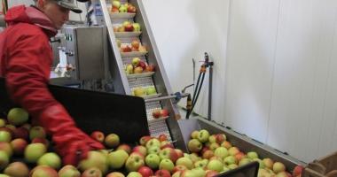 Spaniolii caută muncitori pentru ambalat fructe şi verdeţuri