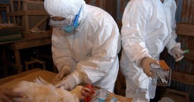 Europa avertizează: Gripa aviară  se extinde cu repeziciune!