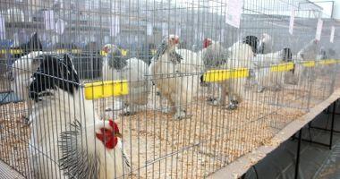 Focar de gripă aviară. Târgurile de păsări vii, interzise