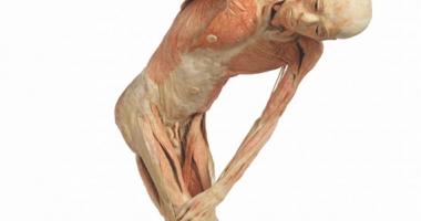Corpul uman,  într-o expoziţie  în premieră la Constanţa