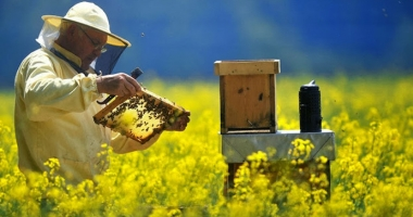 Finanţare pentru apicultori