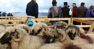 Finanțare pentru crescătorii de animale
