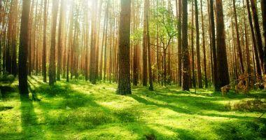 Finanțare pentru servicii de silvomediu, servicii climatice și conservarea pădurilor
