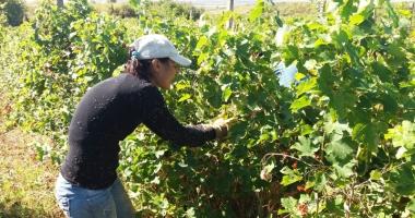 Fiscul vinde plantaţii de viţă de vie,  colecţii de vinuri, ateliere, mori şi terenuri