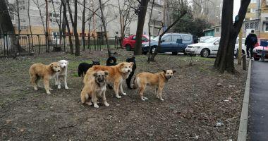 """Maidanezii """"încolţesc"""" Constanţa. Când va fi gata adăpostul de câini şi când vor fi adunaţi de pe străzi?"""