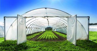 Pregătiri pentru grădină şi livadă. Ce trebuie să ştiţi pentru a obţine recolte bogate