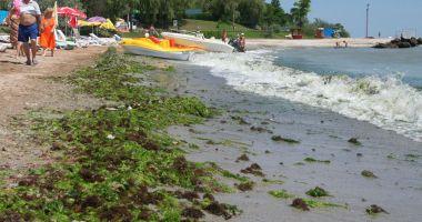 Tone de alge, pe plajele românești.