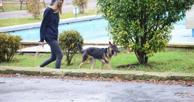 Proprietarii de câini, amendaţi că-i plimbă fără lesă! Pentru maidanezi cine plăteşte amenzile?