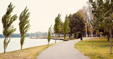 Se înverzeşte Constanţa? Sute de copaci, arbori şi arbuşti, plantaţi în oraş şi parcuri