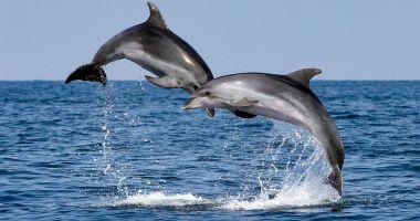 Semnal de alarmă. Zeci de delfini eșuați, pe plajele de pe litoral