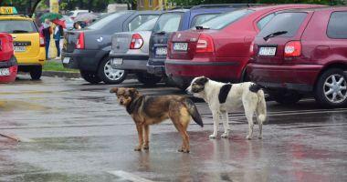 Câinii maidanezi fac legea în Constanţa. Noul ecarisaj, doar pe hârtie; adăpostul - ferecat!