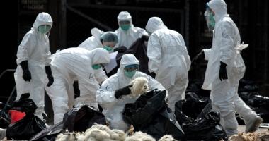 Gripa aviară ia amploare! Ce trebuie să faceţi pentru a vă proteja
