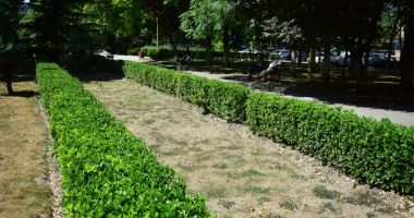 Parcuri fără flori, în mijlocul verii.